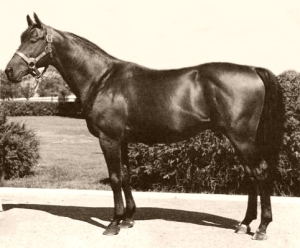 The racehorse Citation. Image from Wikipedia.