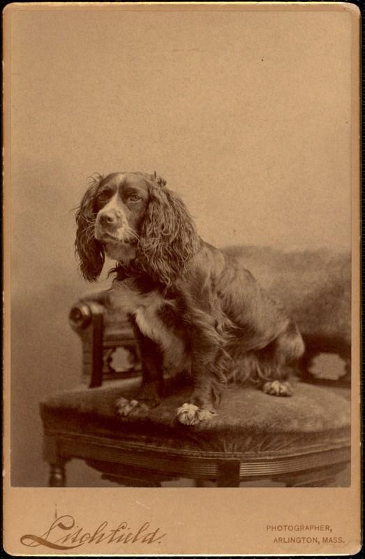 Robbins Sisters' dog, Fife