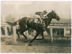 The racehorse Man-O-War, photograph by Brown Brothers, from the New York Public Library digital collection, discovered through DPLA