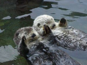 If you know of any books about love between otters, please let me know!