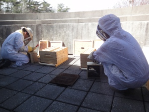 Beekeepers in protective suits putting the bees in the hives