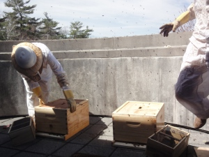 Both hive boxes with their lids on.