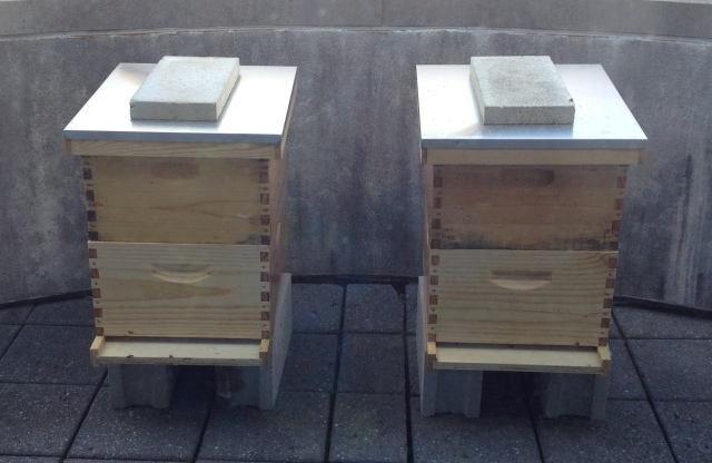 Hives_1777_cropped
