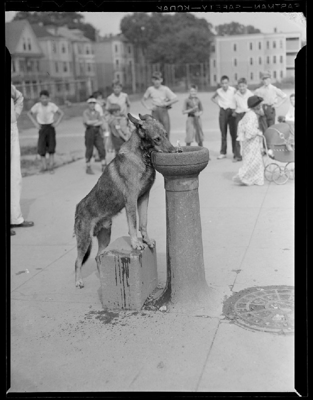 A dog drinking from a water fountain