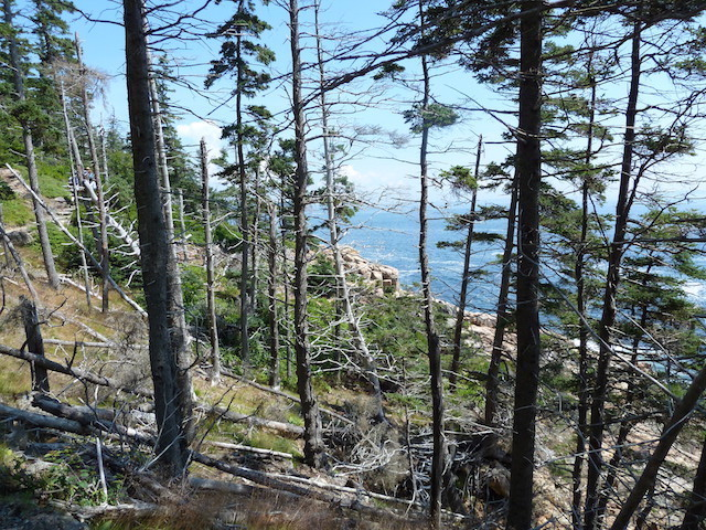Acadia cliff walk