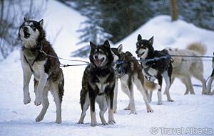 DogSleddingWild