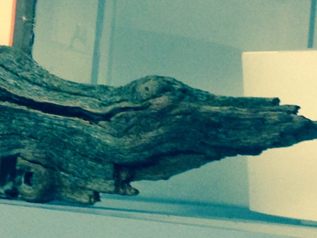 a piece of wood found in Middlesex Fells
