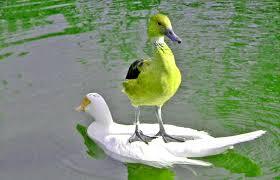 birdtravel