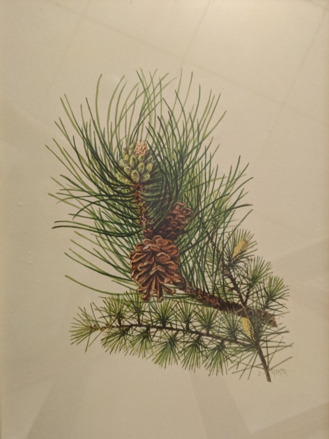 Towne-Pine