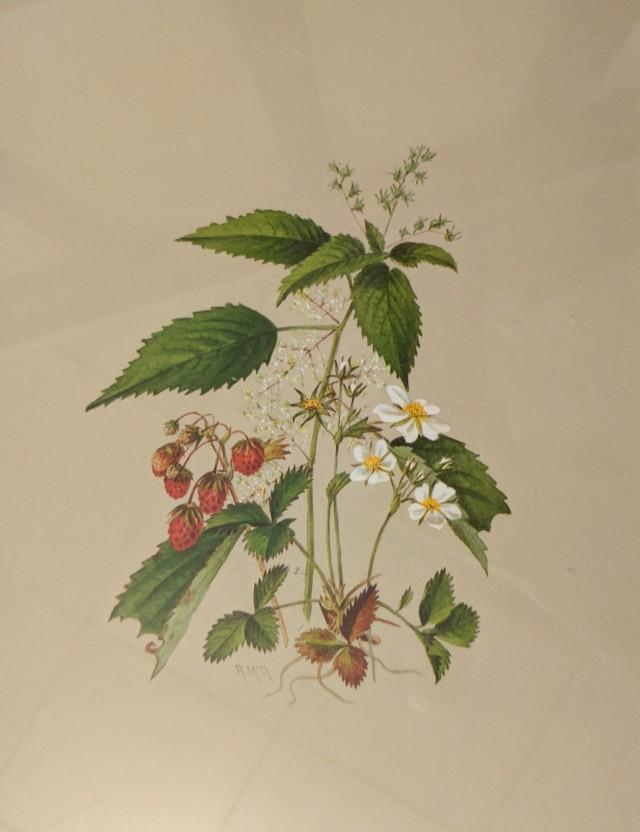 Towne-Strawberries